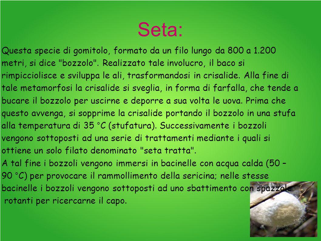 Seta: Questa specie di gomitolo, formato da un filo lungo da 800 a 1.200 metri, si dice bozzolo .