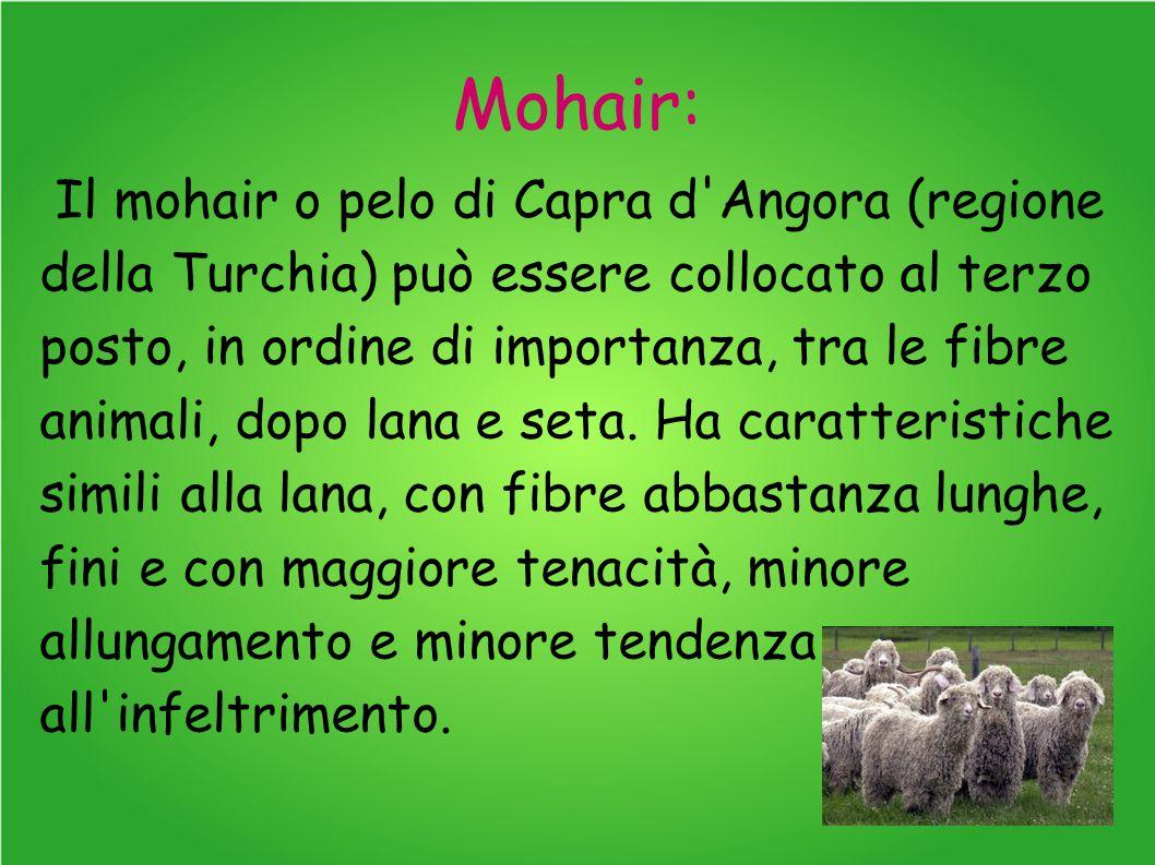 Mohair: Il mohair o pelo di Capra d Angora (regione della Turchia) può essere collocato al terzo posto, in ordine di importanza, tra le fibre animali, dopo lana e seta.