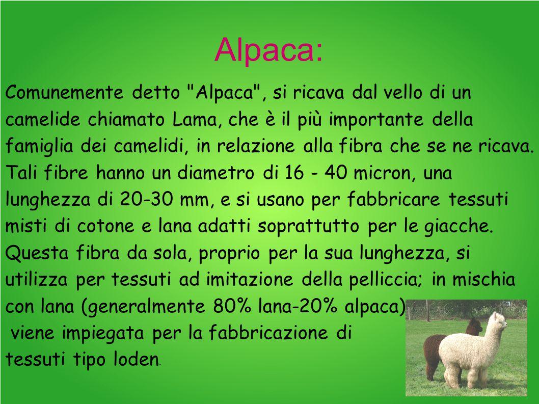 Alpaca: Comunemente detto Alpaca , si ricava dal vello di un camelide chiamato Lama, che è il più importante della famiglia dei camelidi, in relazione alla fibra che se ne ricava.