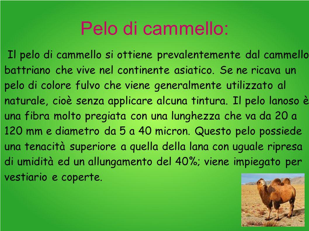 Pelo di cammello: Il pelo di cammello si ottiene prevalentemente dal cammello battriano che vive nel continente asiatico. Se ne ricava un pelo di colo