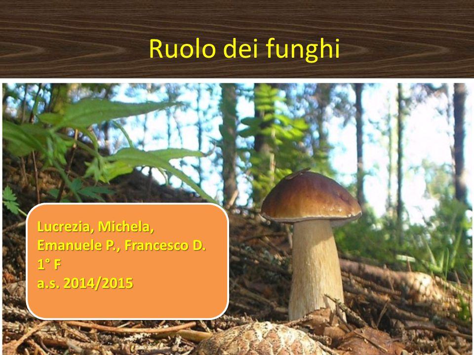 Ruolo dei funghi Lucrezia, Michela, Emanuele P., Francesco D. 1° F a.s. 2014/2015 Lucrezia, Michela, Emanuele P., Francesco D. 1° F a.s. 2014/2015