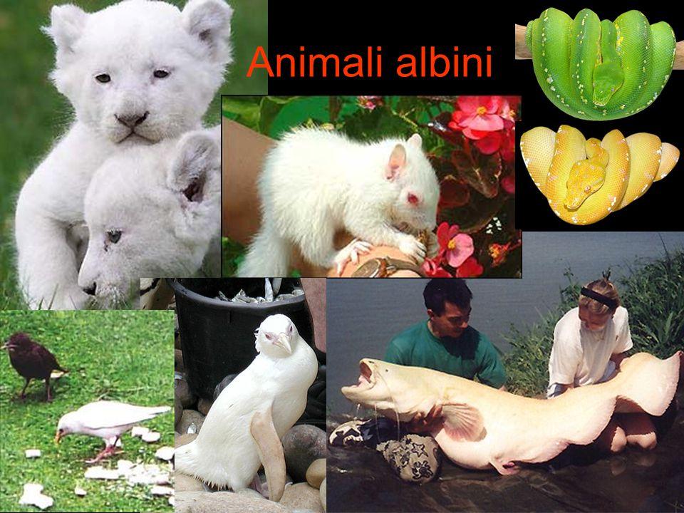 Animali albini