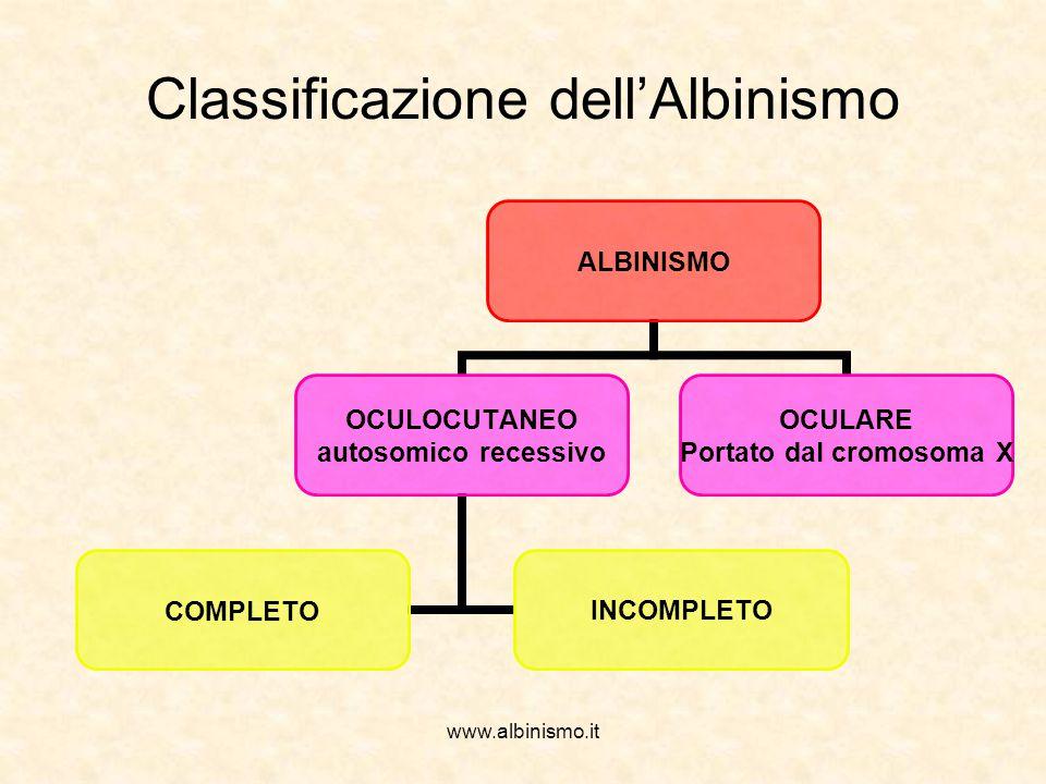 www.albinismo.it ALBINISMO OCULOCUTANEO autosomico recessivo COMPLETOINCOMPLETO OCULARE Portato dal cromosoma X Classificazione dell'Albinismo
