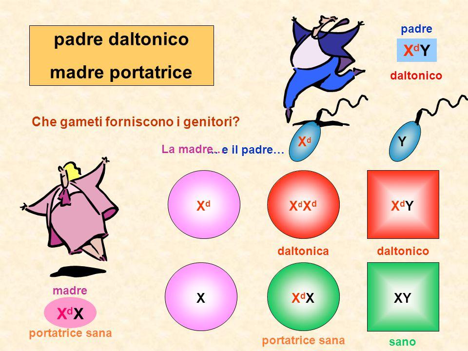 … e il padre… La madre… XdYXdY padre madre daltonico XdXXdX portatrice sana Che gameti forniscono i genitori.