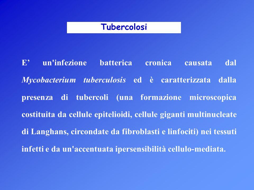 Tubercolosi E' un'infezione batterica cronica causata dal Mycobacterium tuberculosis ed è caratterizzata dalla presenza di tubercoli (una formazione m