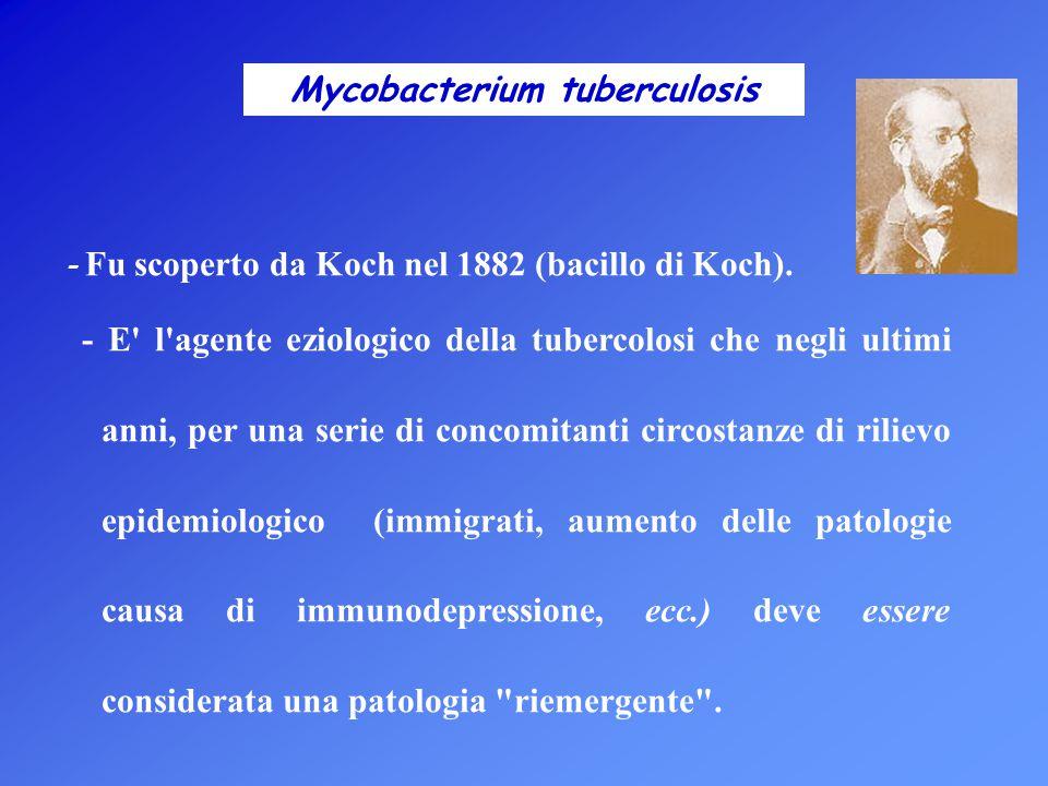 Mycobacterium tuberculosis - Fu scoperto da Koch nel 1882 (bacillo di Koch). - E' l'agente eziologico della tubercolosi che negli ultimi anni, per una
