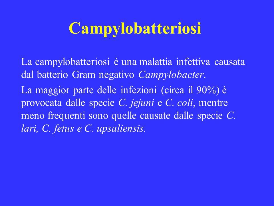 Campylobatteriosi La campylobatteriosi è una malattia infettiva causata dal batterio Gram negativo Campylobacter. La maggior parte delle infezioni (ci
