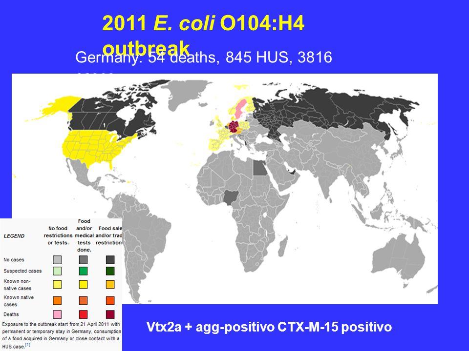 2011 E. coli O104:H4 outbreak Vtx2a + agg-positivo CTX-M-15 positivo Germany: 54 deaths, 845 HUS, 3816 cases