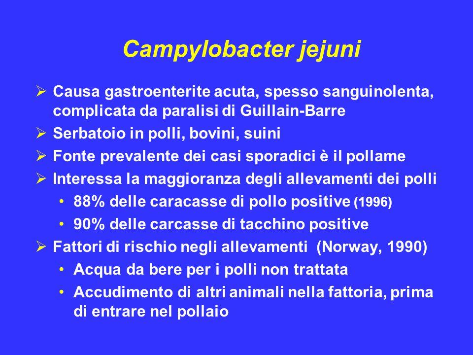 Campylobacter jejuni  Causa gastroenterite acuta, spesso sanguinolenta, complicata da paralisi di Guillain-Barre  Serbatoio in polli, bovini, suini