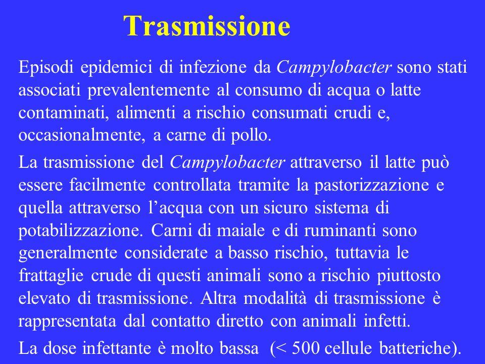 Trasmissione Episodi epidemici di infezione da Campylobacter sono stati associati prevalentemente al consumo di acqua o latte contaminati, alimenti a