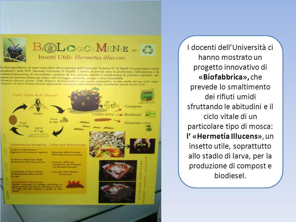 I docenti dell'Università ci hanno mostrato un progetto innovativo di «Biofabbrica», che prevede lo smaltimento dei rifiuti umidi sfruttando le abitudini e il ciclo vitale di un particolare tipo di mosca: l' «Hermetia Illucens», un insetto utile, soprattutto allo stadio di larva, per la produzione di compost e biodiesel.
