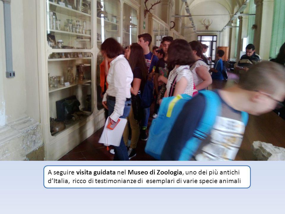 A seguire visita guidata nel Museo di Zoologia, uno dei più antichi d'Italia, ricco di testimonianze di esemplari di varie specie animali