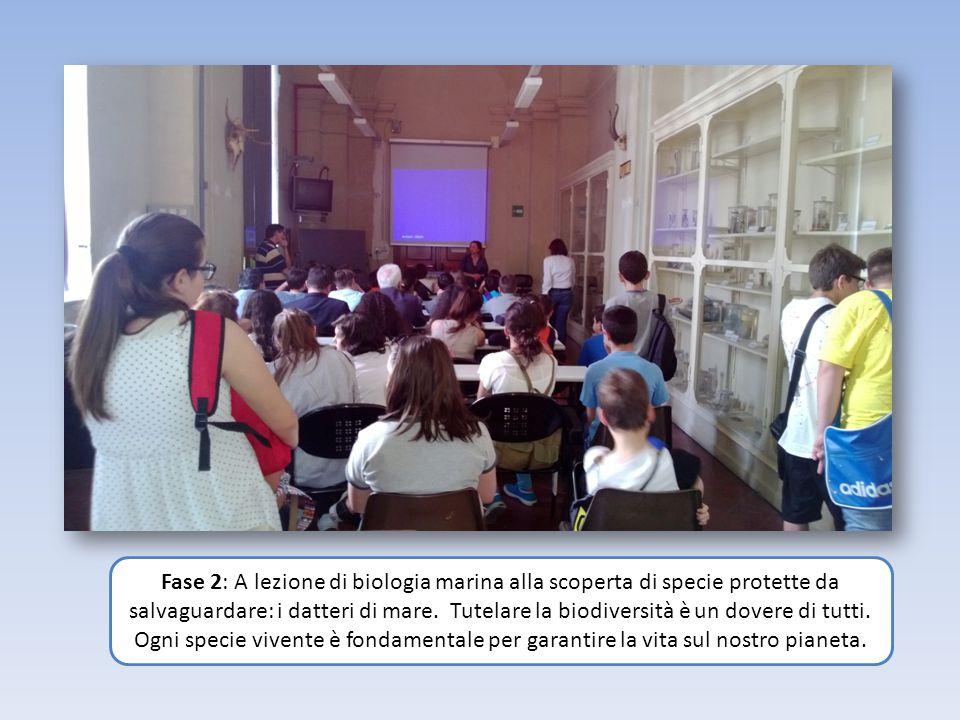Fase 2: A lezione di biologia marina alla scoperta di specie protette da salvaguardare: i datteri di mare.
