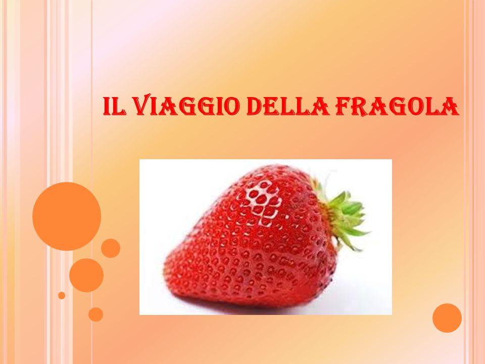 SETTORE PRIMARIO:  Per fragola si intendono i frutti delle piante del genere fragaria.
