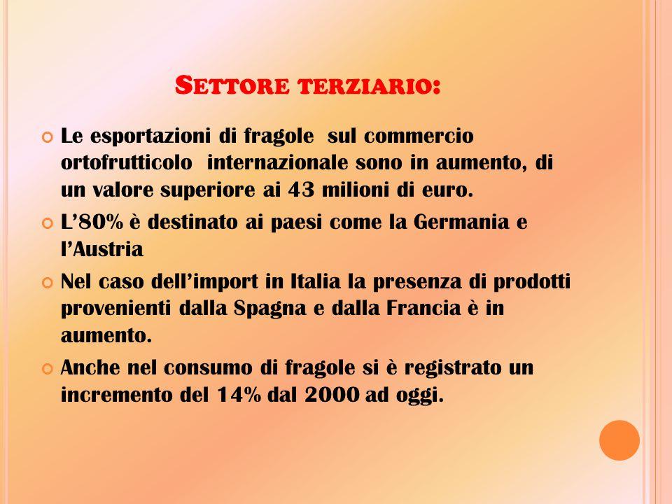 S ETTORE TERZIARIO : Le esportazioni di fragole sul commercio ortofrutticolo internazionale sono in aumento, di un valore superiore ai 43 milioni di e