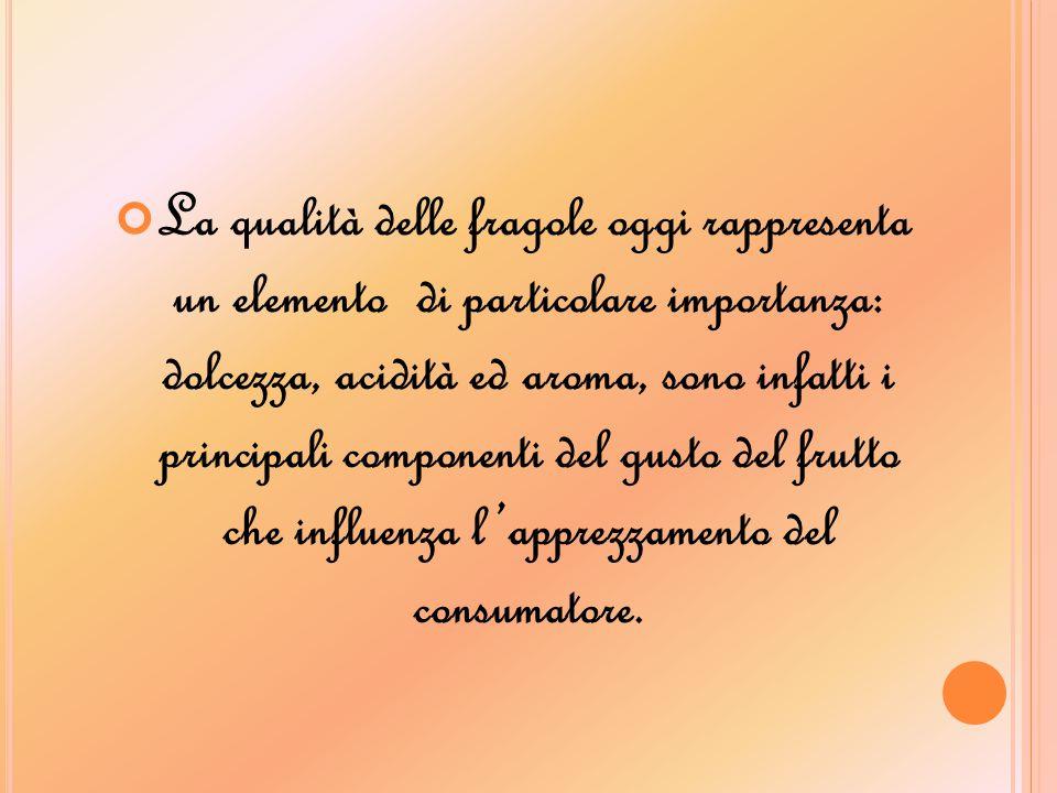 La qualità delle fragole oggi rappresenta un elemento di particolare importanza: dolcezza, acidità ed aroma, sono infatti i principali componenti del
