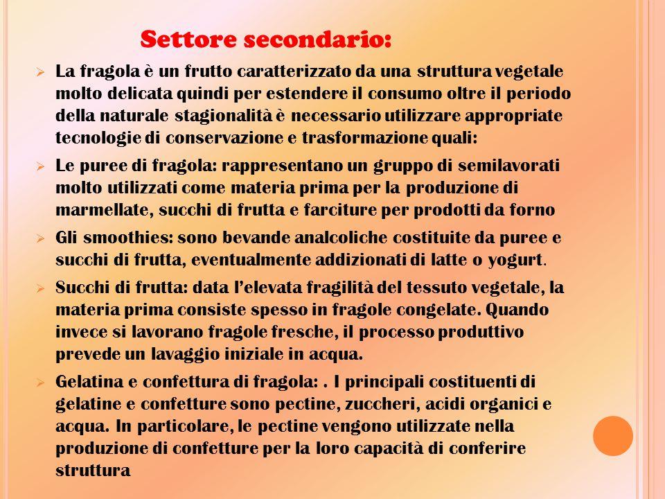 S ETTORE SECONDARIO :  La fragola è un frutto caratterizzato da una struttura vegetale molto delicata quindi per estendere il consumo oltre il period
