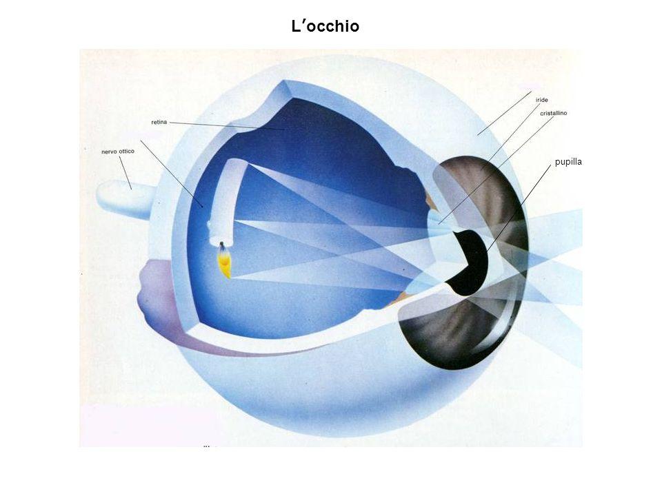 pupilla L'occhio
