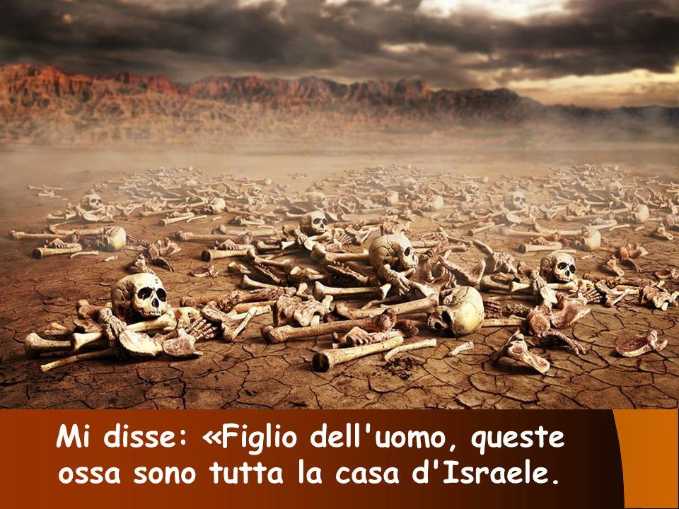 Mi disse: «Figlio dell'uomo, queste ossa sono tutta la casa d'Israele.