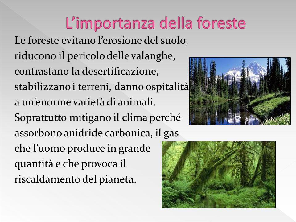 Le foreste evitano l'erosione del suolo, riducono il pericolo delle valanghe, contrastano la desertificazione, stabilizzano i terreni, danno ospitalità a un'enorme varietà di animali.