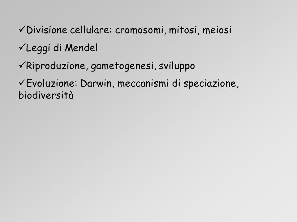 Divisione cellulare: cromosomi, mitosi, meiosi Leggi di Mendel Riproduzione, gametogenesi, sviluppo Evoluzione: Darwin, meccanismi di speciazione, biodiversità