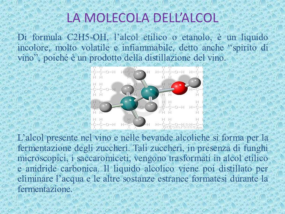 """LA MOLECOLA DELL'ALCOL Di formula C2H5-OH, l'alcol etilico o etanolo, è un liquido incolore, molto volatile e infiammabile, detto anche """"spirito di vi"""