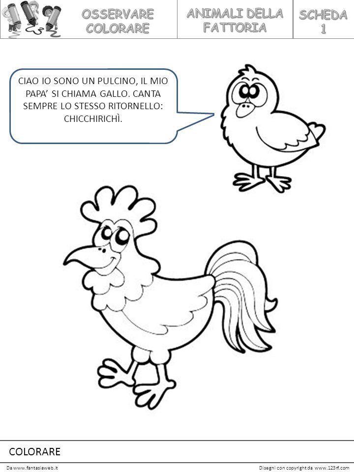 Da www.fantasiaweb.itDisegni con copyright da www.123rf.com CIAO IO SONO UN PULCINO, IL MIO PAPA' SI CHIAMA GALLO. CANTA SEMPRE LO STESSO RITORNELLO: