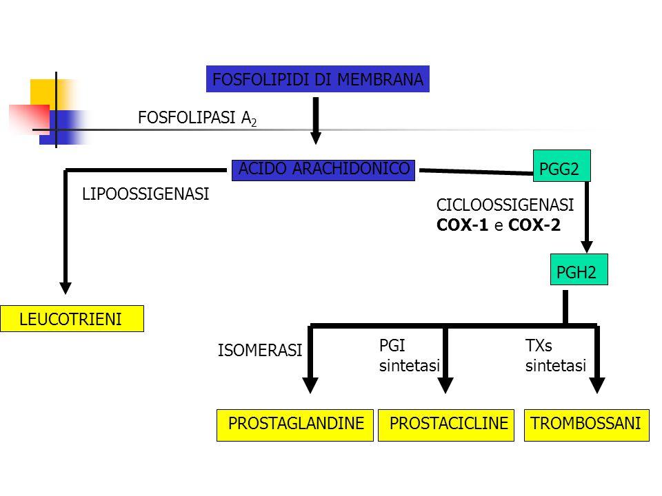 FOSFOLIPIDI DI MEMBRANA ACIDO ARACHIDONICO LEUCOTRIENI FOSFOLIPASI A 2 CICLOOSSIGENASI COX-1 e COX-2 PGH2 PROSTAGLANDINEPROSTACICLINETROMBOSSANI LIPOO