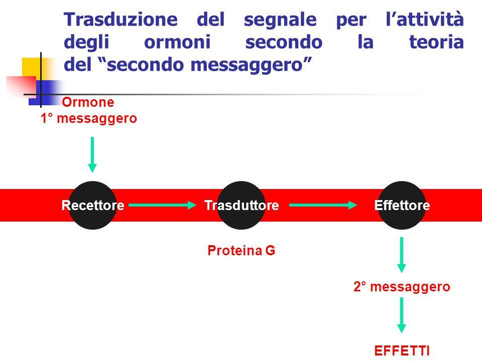 Ormone 1° messaggero EFFETTI RecettoreTrasduttoreEffettore 2° messaggero Proteina G Trasduzione del segnale per l'attività degli ormoni secondo la teo
