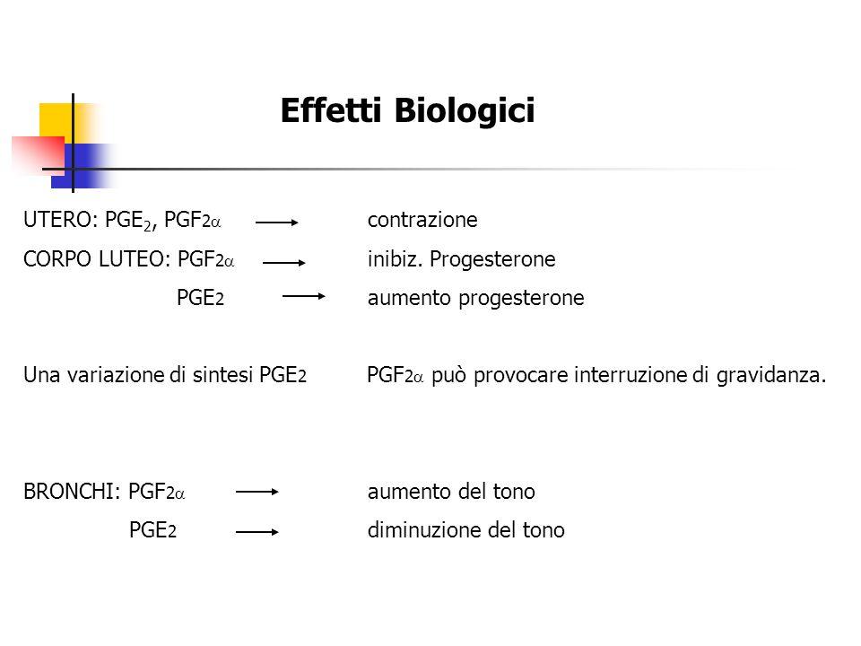 Effetti Biologici UTERO: PGE 2, PGF 2  contrazione CORPO LUTEO: PGF 2  inibiz. Progesterone PGE 2 aumento progesterone Una variazione di sintesi PGE