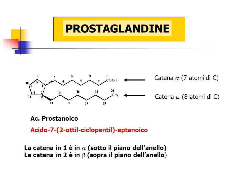 Catena  (7 atomi di C) Catena  (8 atomi di C) Ac. Prostanoico Acido-7-(2-ottil-ciclopentil)-eptanoico La catena in 1 è in  (sotto il piano dell'ane