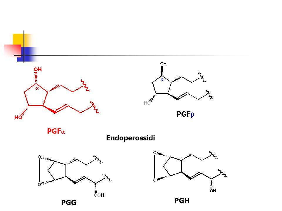 PGF  PGF  Endoperossidi PGG PGH