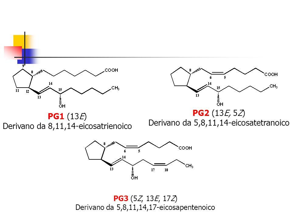 PG1 (13E) Derivano da 8,11,14-eicosatrienoico PG2 (13E, 5Z) Derivano da 5,8,11,14-eicosatetranoico PG3 (5Z, 13E, 17Z) Derivano da 5,8,11,14,17-eicosap
