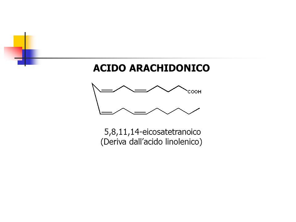 ACIDO ARACHIDONICO 5,8,11,14-eicosatetranoico (Deriva dall'acido linolenico)
