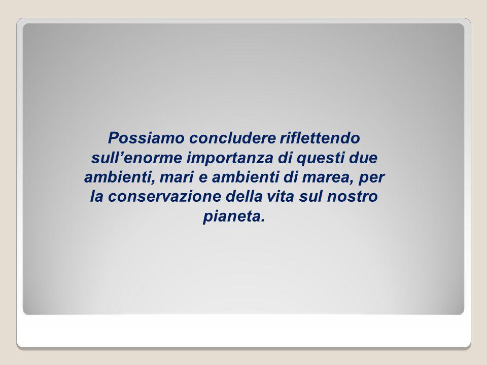 Autore: Tommaso, classe 3 media Piancavallo Foto: prof.