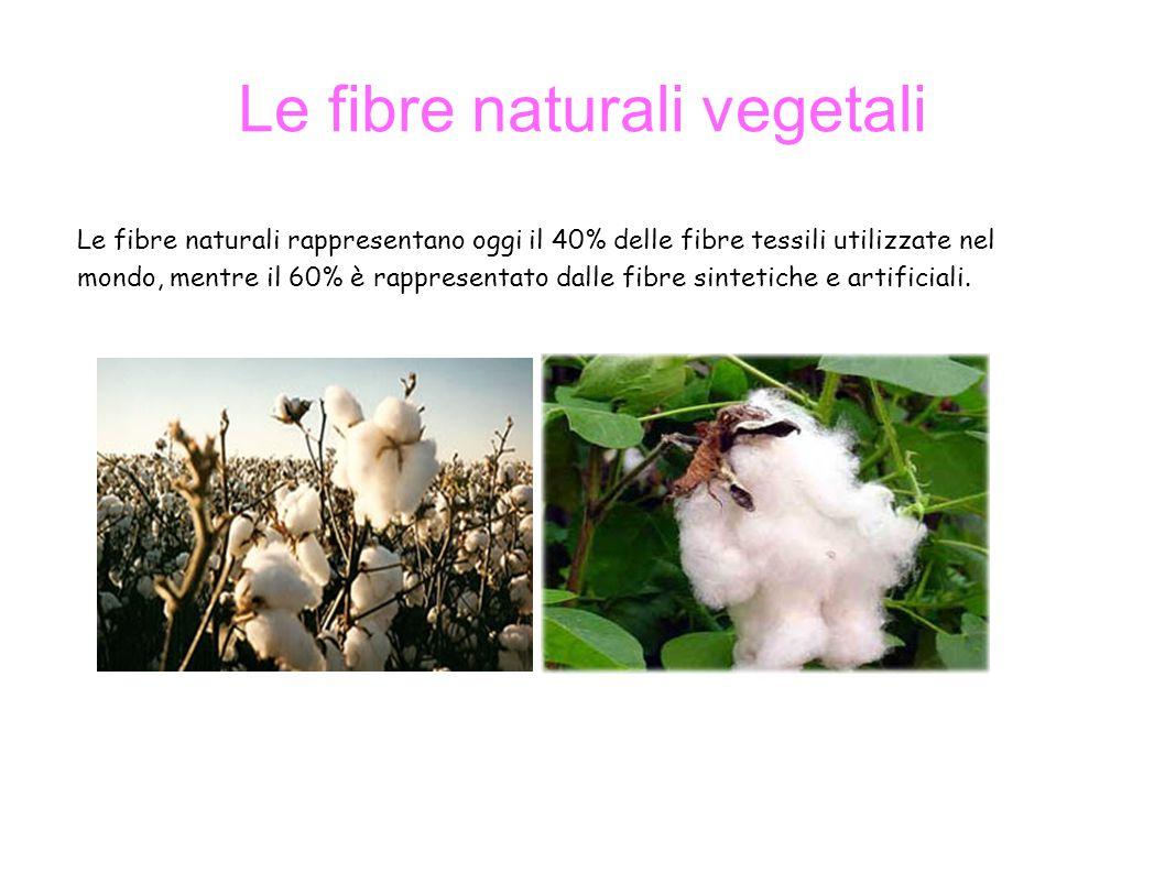 Le fibre naturali vegetali Le fibre naturali rappresentano oggi il 40% delle fibre tessili utilizzate nel mondo, mentre il 60% è rappresentato dalle fibre sintetiche e artificiali.