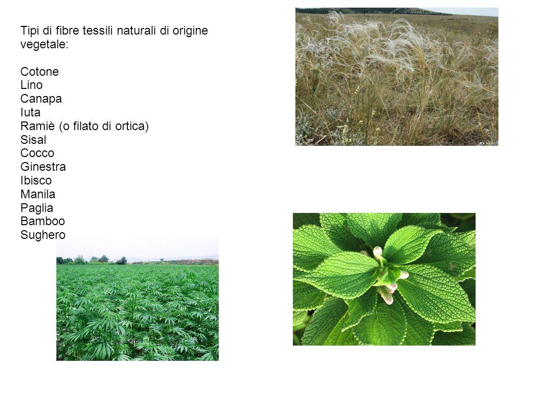 Tipi di fibre tessili naturali di origine vegetale: Cotone Lino Canapa Iuta Ramiè (o filato di ortica) Sisal Cocco Ginestra Ibisco Manila Paglia Bamboo Sughero