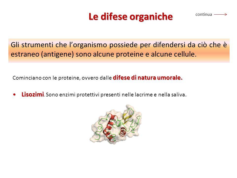 Gli strumenti che l'organismo possiede per difendersi da ciò che è estraneo (antigene) sono alcune proteine e alcune cellule. difese di natura umorale