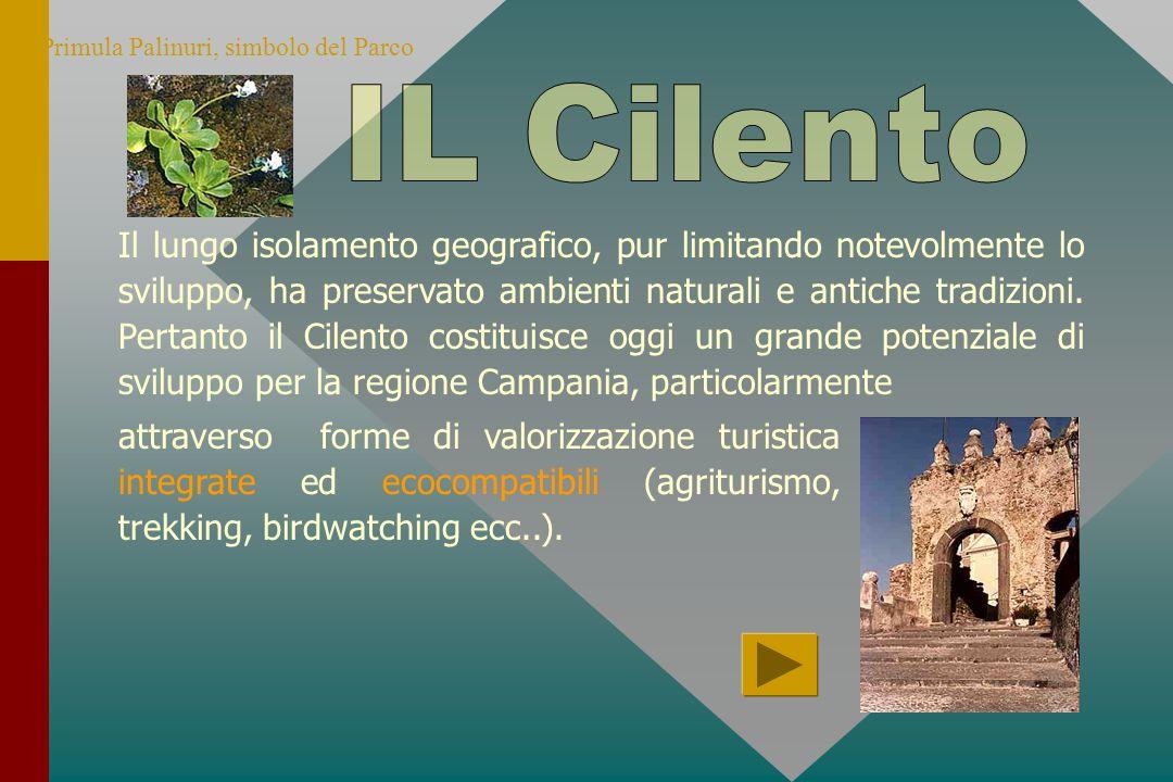 Primula Palinuri, simbolo del Parco Il lungo isolamento geografico, pur limitando notevolmente lo sviluppo, ha preservato ambienti naturali e antiche tradizioni.