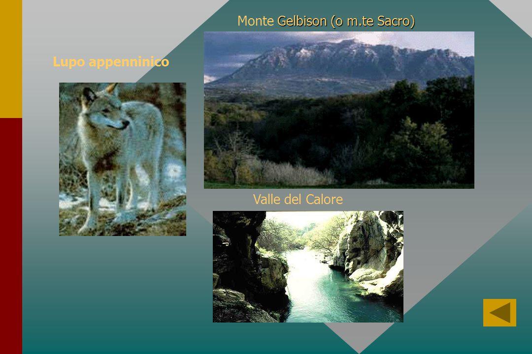 Monte Gelbison (o m.te Sacro) Valle del Calore Lupo appenninico