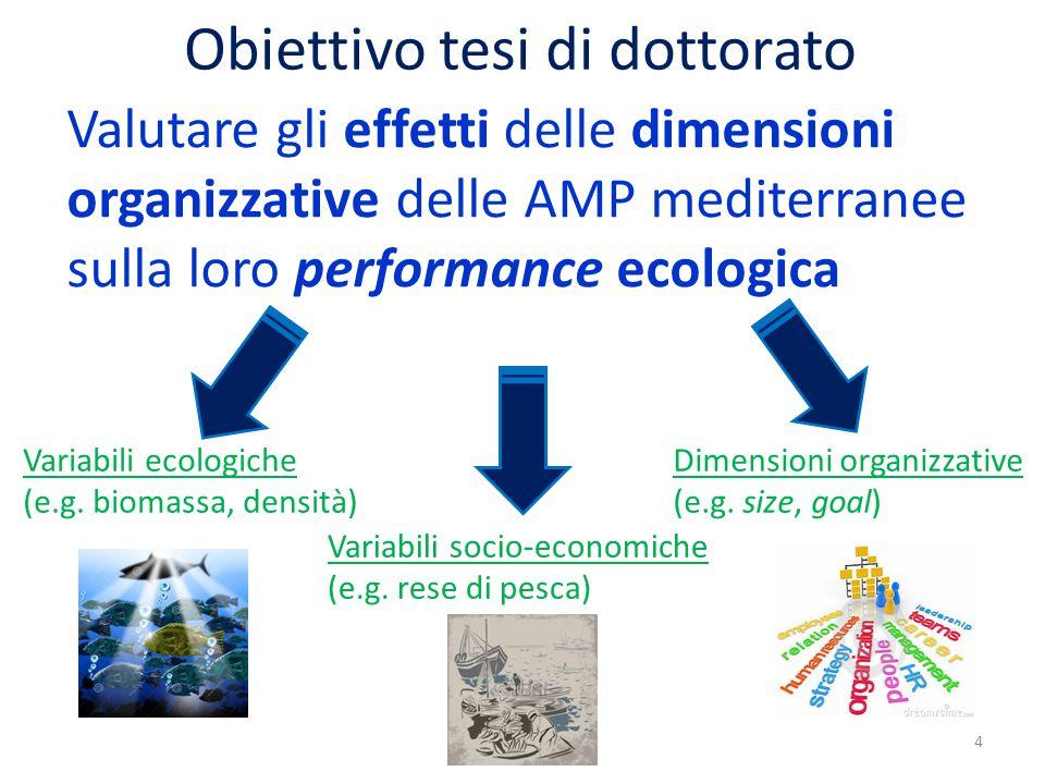 Obiettivo tesi di dottorato Valutare gli effetti delle dimensioni organizzative delle AMP mediterranee sulla loro performance ecologica 4 Variabili ecologiche (e.g.