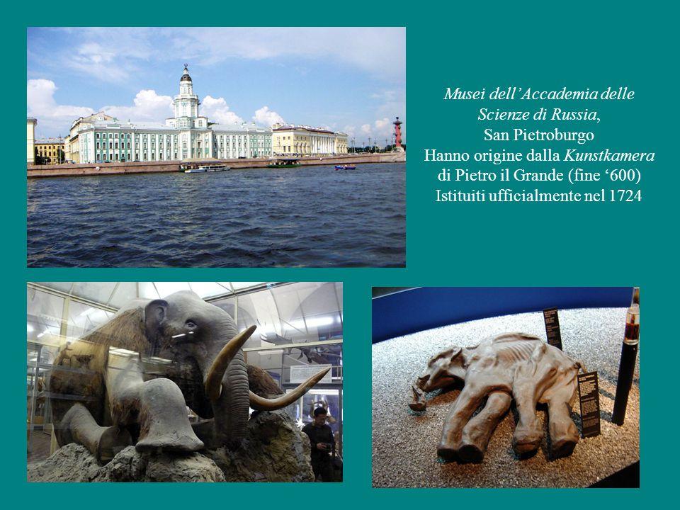 Musei dell'Accademia delle Scienze di Russia, San Pietroburgo Hanno origine dalla Kunstkamera di Pietro il Grande (fine '600) Istituiti ufficialmente nel 1724