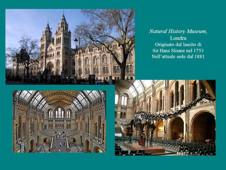 Natural History Museum, Londra Originato dal lascito di Sir Hans Sloane nel 1753 Nell'attuale sede dal 1881