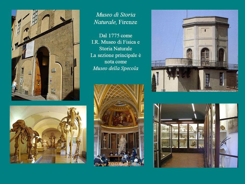 Museo di Storia Naturale, Firenze Dal 1775 come I.R.