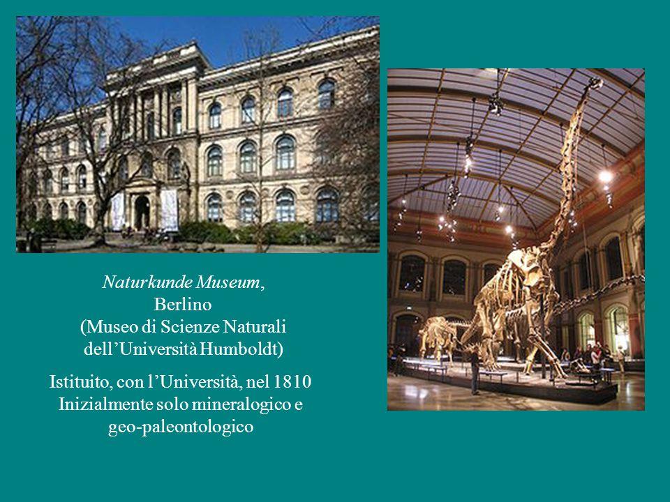Naturkunde Museum, Berlino (Museo di Scienze Naturali dell'Università Humboldt) Istituito, con l'Università, nel 1810 Inizialmente solo mineralogico e geo-paleontologico