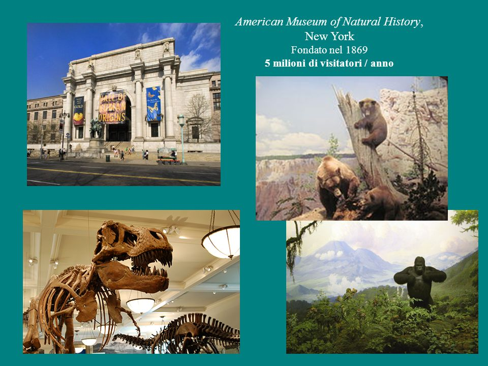 Field Museum of Natural History, Chicago Origina dal Columbian Museum, fondato nel 1893 Costituito come Museo a sé nel 1905 National Museum of Natural History, Washington Fondato nel 1910, fa parte della Smithsonian Institution (come altri 19 musei)
