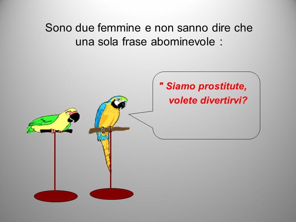Sono due femmine e non sanno dire che una sola frase abominevole : Siamo prostitute, volete divertirvi?