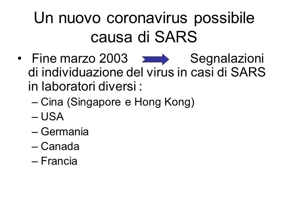 Un nuovo coronavirus possibile causa di SARS Fine marzo 2003 Segnalazioni di individuazione del virus in casi di SARS in laboratori diversi : –Cina (S