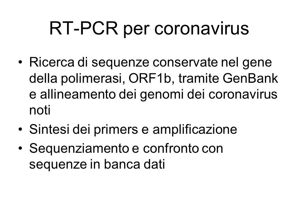 RT-PCR per coronavirus Ricerca di sequenze conservate nel gene della polimerasi, ORF1b, tramite GenBank e allineamento dei genomi dei coronavirus noti