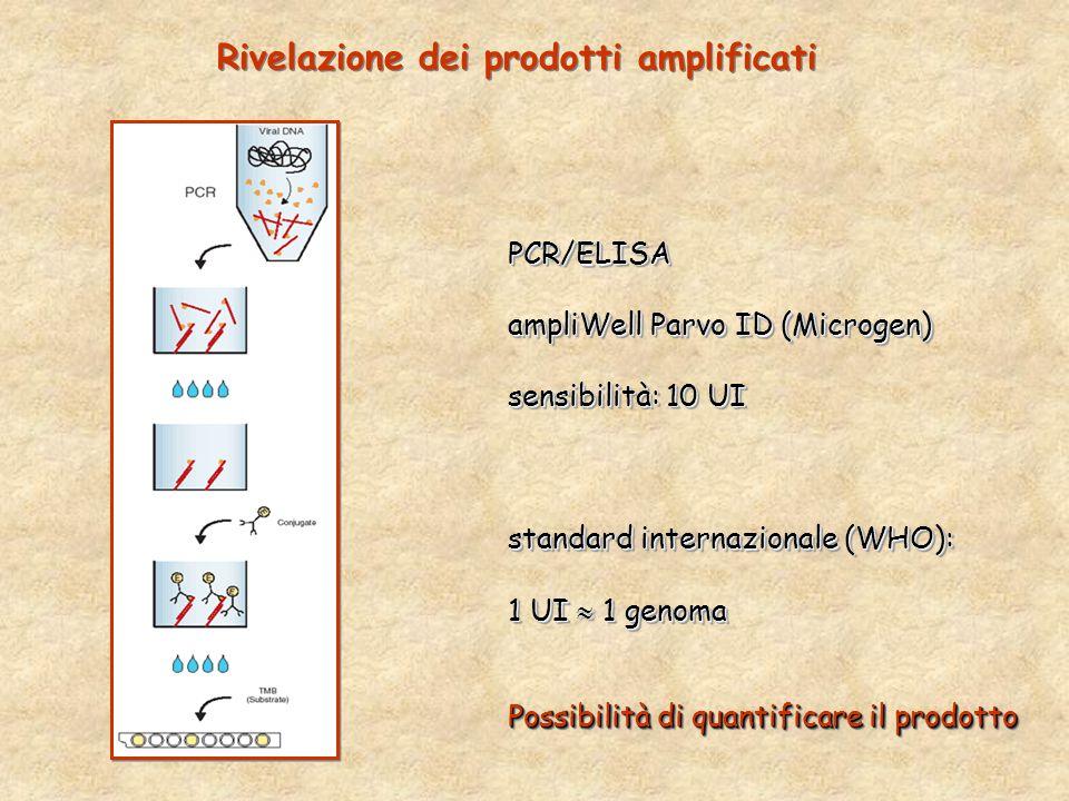 PCR/ELISA ampliWell Parvo ID (Microgen) sensibilità: 10 UI standard internazionale (WHO): 1 UI  1 genoma Possibilità di quantificare il prodotto PCR/ELISA ampliWell Parvo ID (Microgen) sensibilità: 10 UI standard internazionale (WHO): 1 UI  1 genoma Possibilità di quantificare il prodotto Rivelazione dei prodotti amplificati